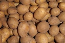 Butterball Potatoes